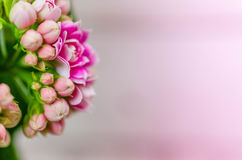 Pink flowers royalty free stock image
