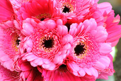 Pink Flowers Closeup. Brides pink bouquet closeup on wedding day Stock Images