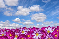 Pink flowers with clouds Royalty Free Stock Image