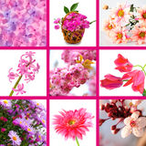Pink Flowers Collage Stock Photography