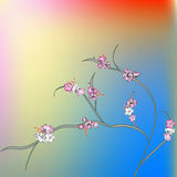 Pink flowers with colorful background. Template for greeting card Stock Photos