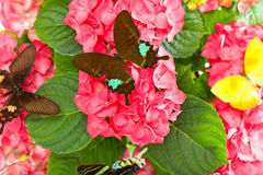 Pink flowers with colorful butterflies Royalty Free Stock Photos