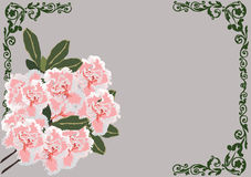 Pink flowers in dark frame design Stock Photography