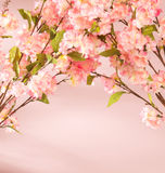 Pink flowers decorating the flat Stock Image