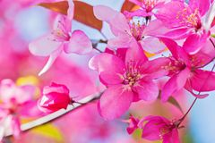 Pink flowers on the bush. Shallow depth of field. Stock Photos
