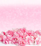Pink flowers with dew drops on blur background Stock Photos