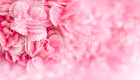Pink flowers with dew drops on blur background Royalty Free Stock Photo