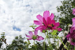 Pink flowers. Different type of perspective, interesting perspective Royalty Free Stock Photo