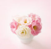 Pink flowers (eustoma) on pale  pink background. Royalty Free Stock Photo
