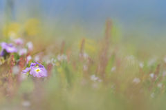 Pink flowers in the field. Cute pink flowers in the field Stock Images