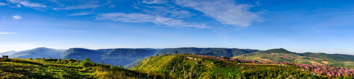 Pink Flowers Field in Mountain with Blue Sky at Thailand. Panorama mountain and Flowers Field Royalty Free Stock Photo