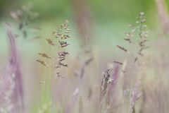 Pink flowers in the field. Pink wildflowers in the field Stock Photo