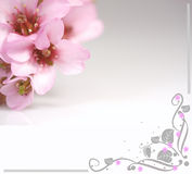 Pink flowers and flower illustration Royalty Free Stock Images
