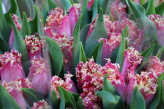 Pink flowers. On the flower market, Amsterdam, Netherlands Royalty Free Stock Photography
