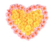 Pink flowers in form of heart. Royalty Free Stock Image