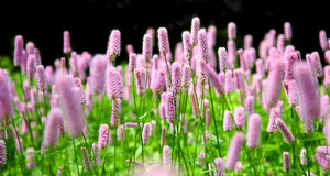 Pink flowers in a formal garden Royalty Free Stock Photos