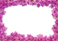 Pink flowers frame Royalty Free Stock Images