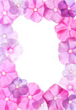 Pink flowers, frame design. Pink flowers in frame design Stock Image