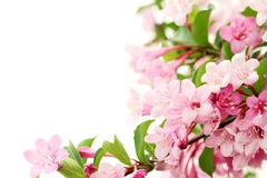 Pink flowers with fresh green leaves Royalty Free Stock Photos