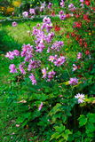 Pink flowers in the garden Stock Photo
