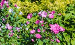 The last flowers of autumn.Autumn nature. tilt shift effect.  tilt shift effect Stock Image