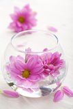 Pink flowers in glass vase Stock Image