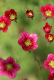 Pink flowers on a green background Royalty Free Stock Images