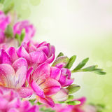 Pink flowers on green blurred background Stock Image