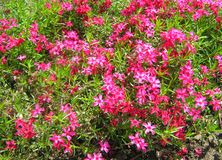 Pink flowers in green . stock photos