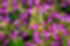 Pink flowers, green lawn Stock Photo
