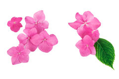 Pink flowers with green leaf  creative natural  pattern background. Flat lay Royalty Free Stock Image