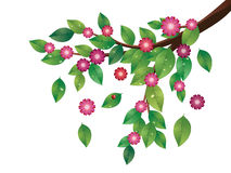Pink Flowers and Green Leaves Branch. Tree branch with green leaves and pink flowers Stock Photography