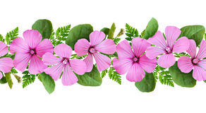 Pink flowers and green leaves line arrangement Stock Photo