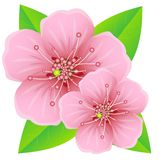 Pink flowers with green leaves Stock Photography