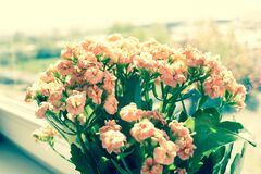 Pink Flowers on Green Plants Phptography Royalty Free Stock Image