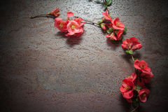 Pink flowers on grey Stock Images