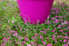 Pink Flowers in Ground Cover Stock Photography