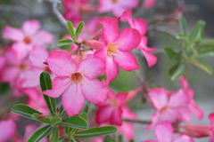 Pink flowers. Group of pink flower with some leaves stock photo