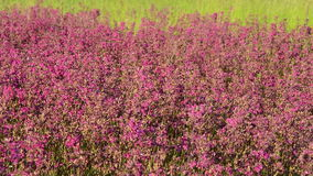 Pink flowers. stock video footage