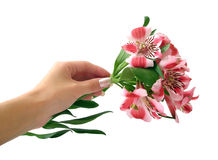 Pink flowers on hand royalty free stock photos