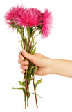 Pink flowers in hand Stock Photo