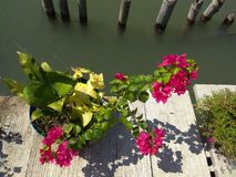A pink flowers on the harbor floor stock photos