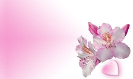 Pink flowers with heart. Pink flowers with pink background and heart shape Royalty Free Stock Photography