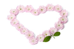 Pink flowers in heart shape Stock Images