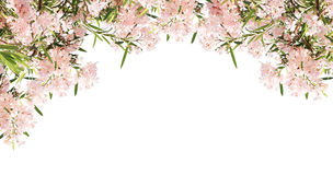 Pink flowers Royalty Free Stock Images