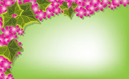 Pink flowers and ivy on green background. Ivy leaves and pink flowers embellish a green background Royalty Free Stock Photos
