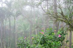 Pink flowers with jungle mist Stock Image
