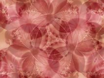 Pink Flowers Lace Background Royalty Free Stock Images