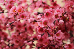 Pink flowers. Little pink flowers, artificial tree Stock Photography