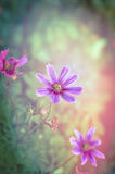 Pink flowers on magic garden background, toned Stock Image